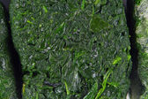 Spinach background — Stock Photo