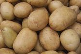 Vit potatis — Stockfoto