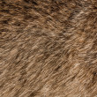 Stock Photo: Animal fur texture
