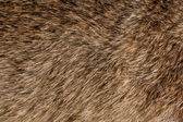Animal fur texture — Stock Photo