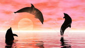 Playing dolphins — Stock Photo