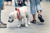 View of the street from the dog — Stock Photo