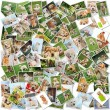 Dog collage - 101 pieces - Foto de Stock