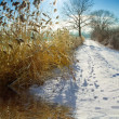 A nice sunny winter day A nice sunny winter day — Stock Photo #14899365