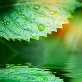 Zelené listy odražené ve vodou closeup — Stock fotografie