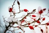 Red rose-hips macro in winter under frost in the cold — Stock Photo