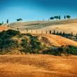 Tuscan landscape in summer time — Stock Photo #19586695