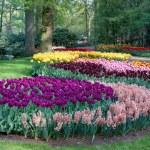 Spring garden — Stock Photo #22402791