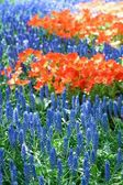 View of the seedbed of flower — Stock Photo