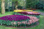 Spring garden — Stockfoto