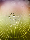 Beautiful detail of the cobwebs — Stock Photo