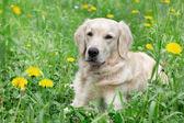 Portrait young beauty dog — Zdjęcie stockowe