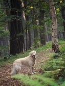 Dog in the forest — Stock Photo