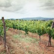 Tuscany vineyard — Stock Photo #36035297