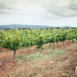 Stock Photo: Tuscany vineyard