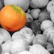 Foto de Stock  : Pumpkin background