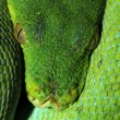 Green snake on a branch — Stock Photo