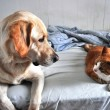 Dog and Cat — Foto de Stock