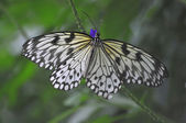 Colorful Tropical Butterfly — Stock Photo
