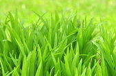 Green Foliage Background — Stock Photo