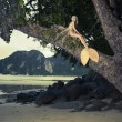 Beautiful mermaid sitting on mighty tree - Stock Photo