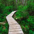 Stock Photo: Forest trail in Rainforest on Vancouver island