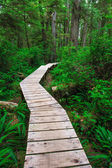 Forest trail in Rainforest on Vancouver island — Stock Photo