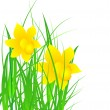 Daffodils in the grass — Stock Vector #22120901