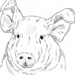 Portrait pig — Stockvektor #26076975