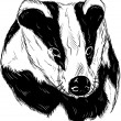Badger head — Stock Vector