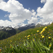 Meadow below the mountain — Stock Photo