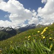 Meadow below the mountain — Stockfoto