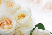 White roses with yellow centers — Stock Photo