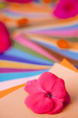 Red and pink flowers on layers of colorful papers — Stock Photo