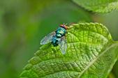 Voa, voa de fruta, descansando na folha verde na luz solar brilhante, cópia espaço, perto — Foto Stock