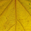 Stock Photo: Leaf pattern, yellow, veins, backlit, nature, decay, close up, m