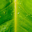 Drops, droplets of water on green leaf, fresh, natural, close up — Stock Photo