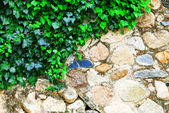 Wall and leaves — Foto Stock