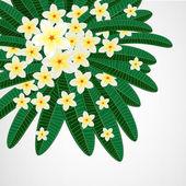 Eps10 Floral design background. Plumeria flowers. — Stock Vector
