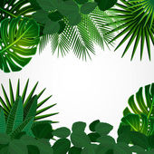 Tropical leaves. Floral design background. — Stock Vector