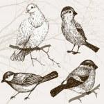 Bird collection — Stock Vector