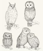 Owl set — Vettoriale Stock