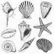 Shell set - Stock Vector