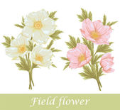 Field flover set — Stock Vector