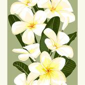 Exotic flower.Pulmeria 4 — Stock Vector