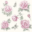 Vintage rose collection — Stock vektor