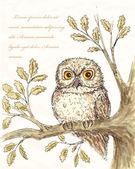 Owl illustation 4 — Stock Vector