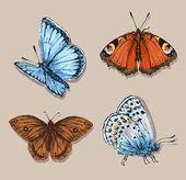 Butterfly set — Vecteur