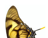 Butterfly wings. — Stock Photo