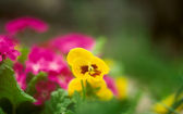 Flower bed. — Stock Photo